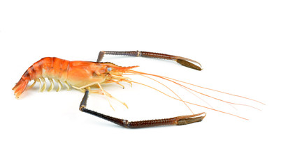 Prawn Isolated on white background