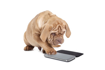 Puppy with cellular phone