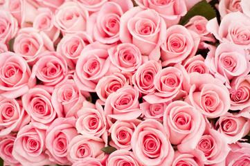 ピンクのバラ バラ 薔薇 ピンク ピンク色