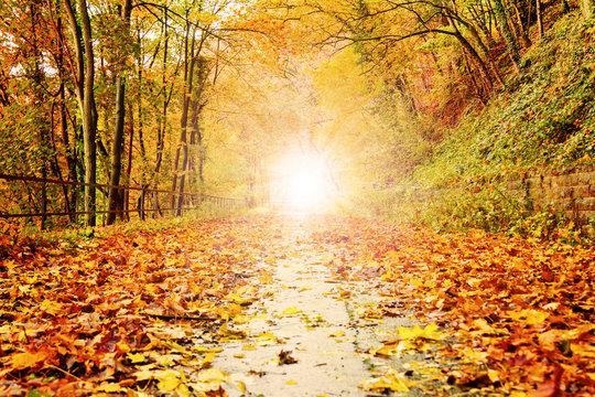 Herbstlicht auf buntem Waldweg – Version 2