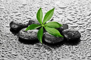 Mokry liść na kamieniach bazaltowych