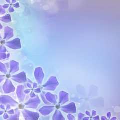 Spring background with periwinkle flower