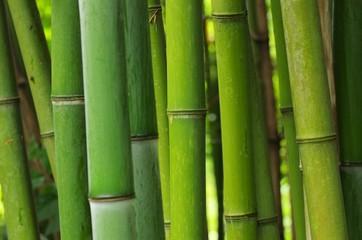 Bambus - bamboo 49