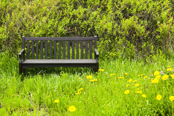 bench and flowers in the park