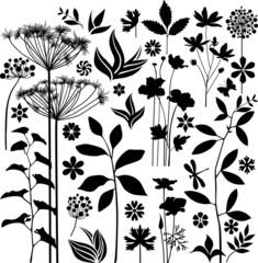 Black botany collection
