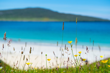 Flowers, white sandy beach, turquoise water in the background