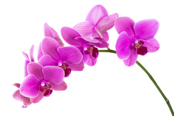 Spoed Fotobehang Orchidee Orchid flowers isolated on white background