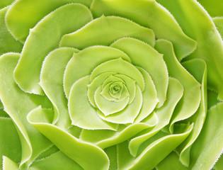 flower green color