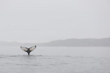 Wall Murals Arctic Humpback whales