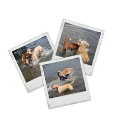 """Photo """"chien"""""""