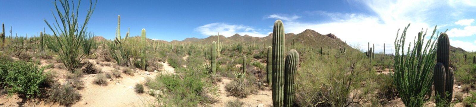 vista paesaggio desertico