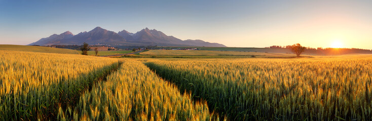 Garden Poster Culture Sunset over wheat field with path in Slovakia Tatra mountain - p