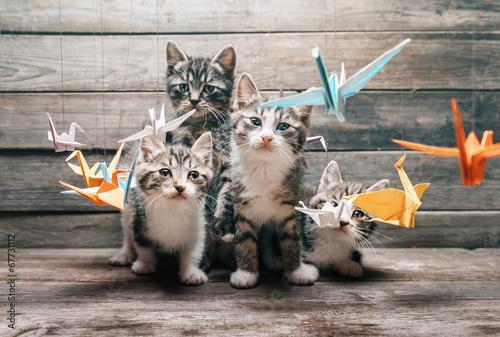 природа животные кот котенок серый журавлики nature animals cat kitten grey cranes  № 654612 бесплатно