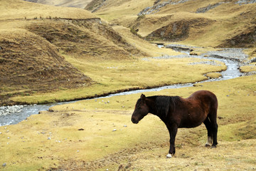 Quebrada Caliente in Cordiliera Huayhuash, Peru, South America