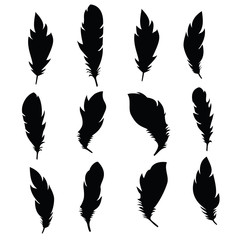 Black feathers. Raster