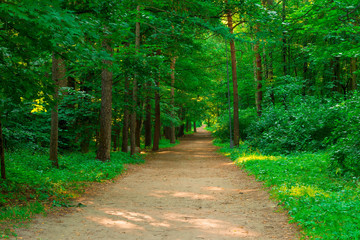 trail in the empty green summer park