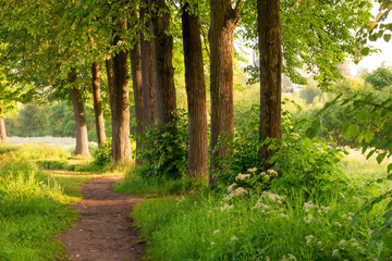 morning sun rays illuminate the beautiful nature