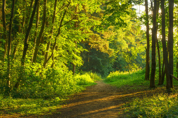 beautiful forest illuminated by the morning sun