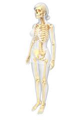 Female skeleton artwork