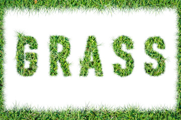 text word GRASS from green grass isolated