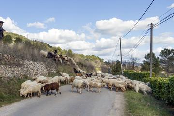 Garden Poster Sheep Kudde schapen op de weg