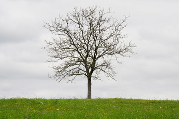 Toter Baum auf grüner Wiese