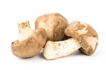 Fresh shitake mushroom