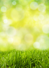 vertical freshness grass field with green abstract background