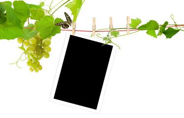 fond pour photo sur corde à linge et vigne