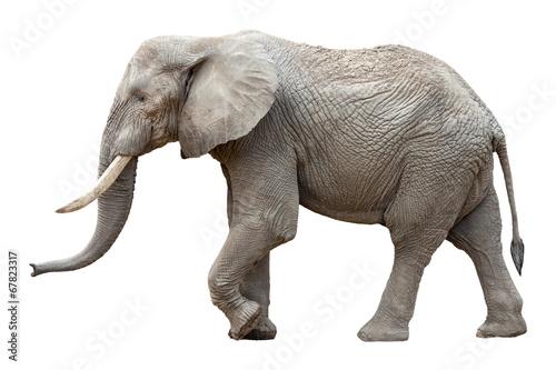 Elefant Vor Weißem Hintergrund Stockfotos Und Lizenzfreie Bilder