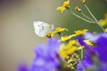 little butterfly