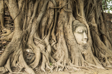 Head of Sandstone Buddha in The Tree Roots at Wat Mahathat, Ayut