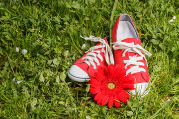 Fotobehang Red sneakers with gerbera flower