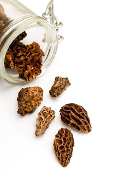 group of morels dried