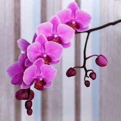 close up shot of pink orchid flower