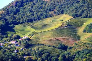 Zelfklevend Fotobehang Diepbruine Vignes d'Ispoure, Pays Basque