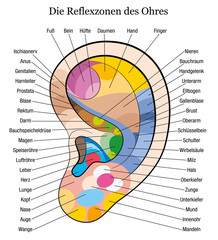 Ear reflexology german description white