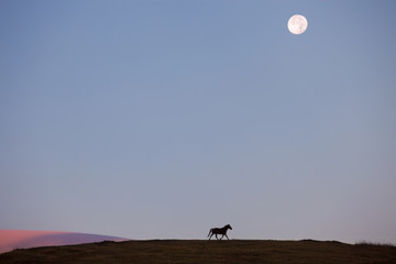 Horse silhouette on the hill