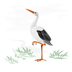 Stork white wild water bird vector illustration