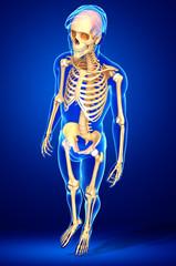 Male skeleton artwork