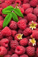 raspberries texture