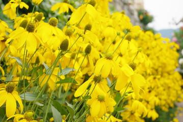 Fleures jaune