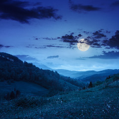 cold fog on forest  in mountains at night