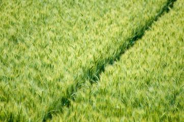 Feld grün