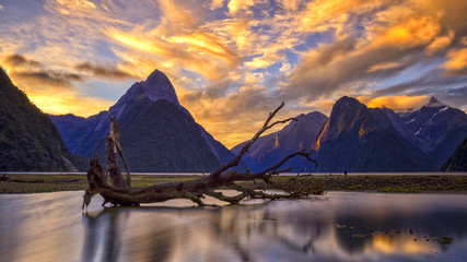 Aluminium Prints New Zealand Milford Sound