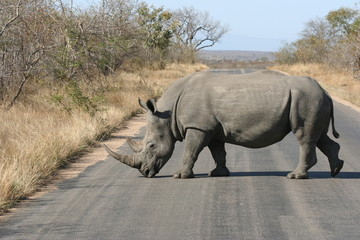 Südafrika - Nasher überquert die Strasse