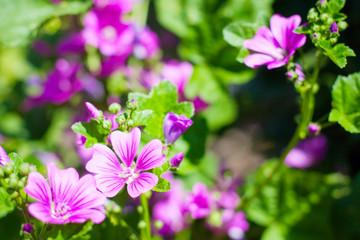 Blossom Garden Flowers