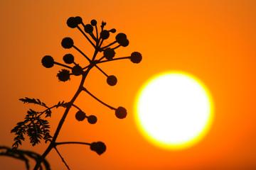 flower in sunset