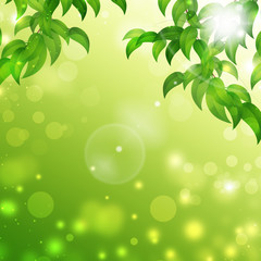 Green Floral Nature Background