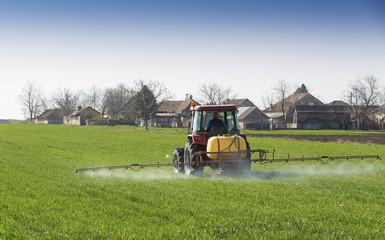 Wall Mural - Farmer spraying wheat field at spring season